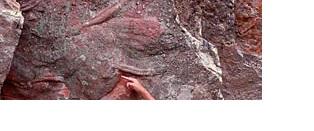 Trilobit-Naturtejo